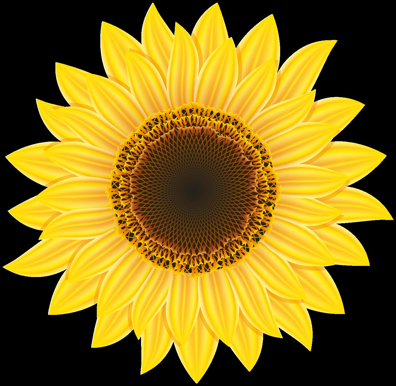 Sunflower PNG Images Transparent Free Download.