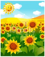 Sunflower Field and Sun stock vectors.