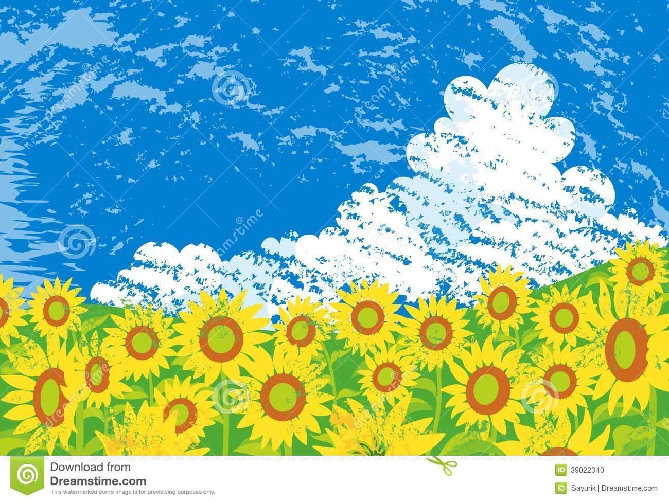 Sunflower Field Stock Vector.
