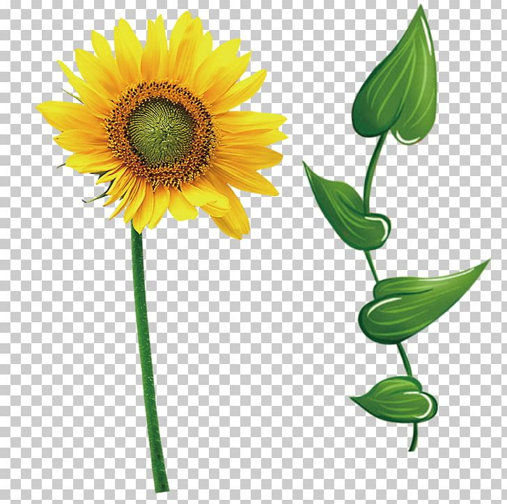Common Sunflower Leaf Icon PNG, Clipart, Cartoon, Cut.