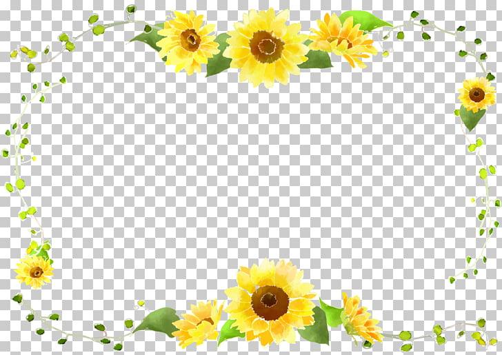 Common sunflower, Sunflower border curve decorative foliage.