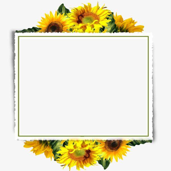 Sunflower Border, Sunflower Clipart, Sunflower Decorative.
