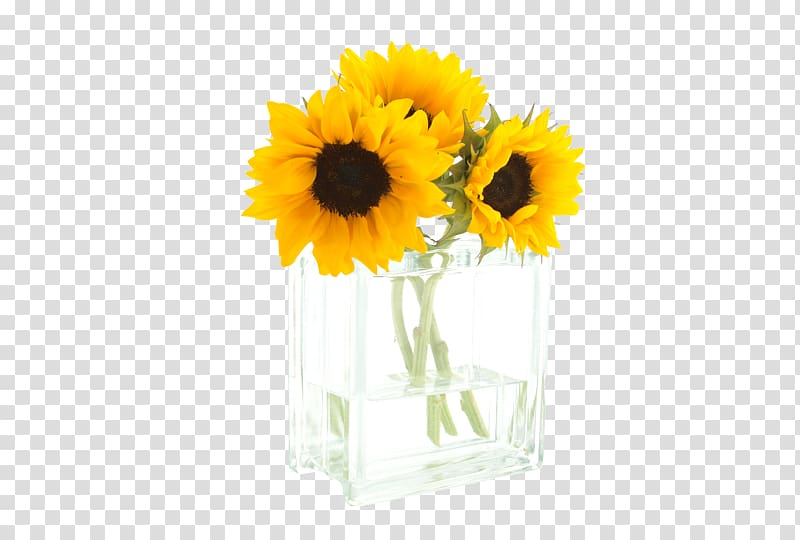 Common sunflower Morning Cut flowers, Sunflower glass vase.