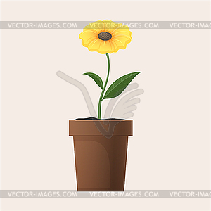 Yellow Flower in Clay Pot.