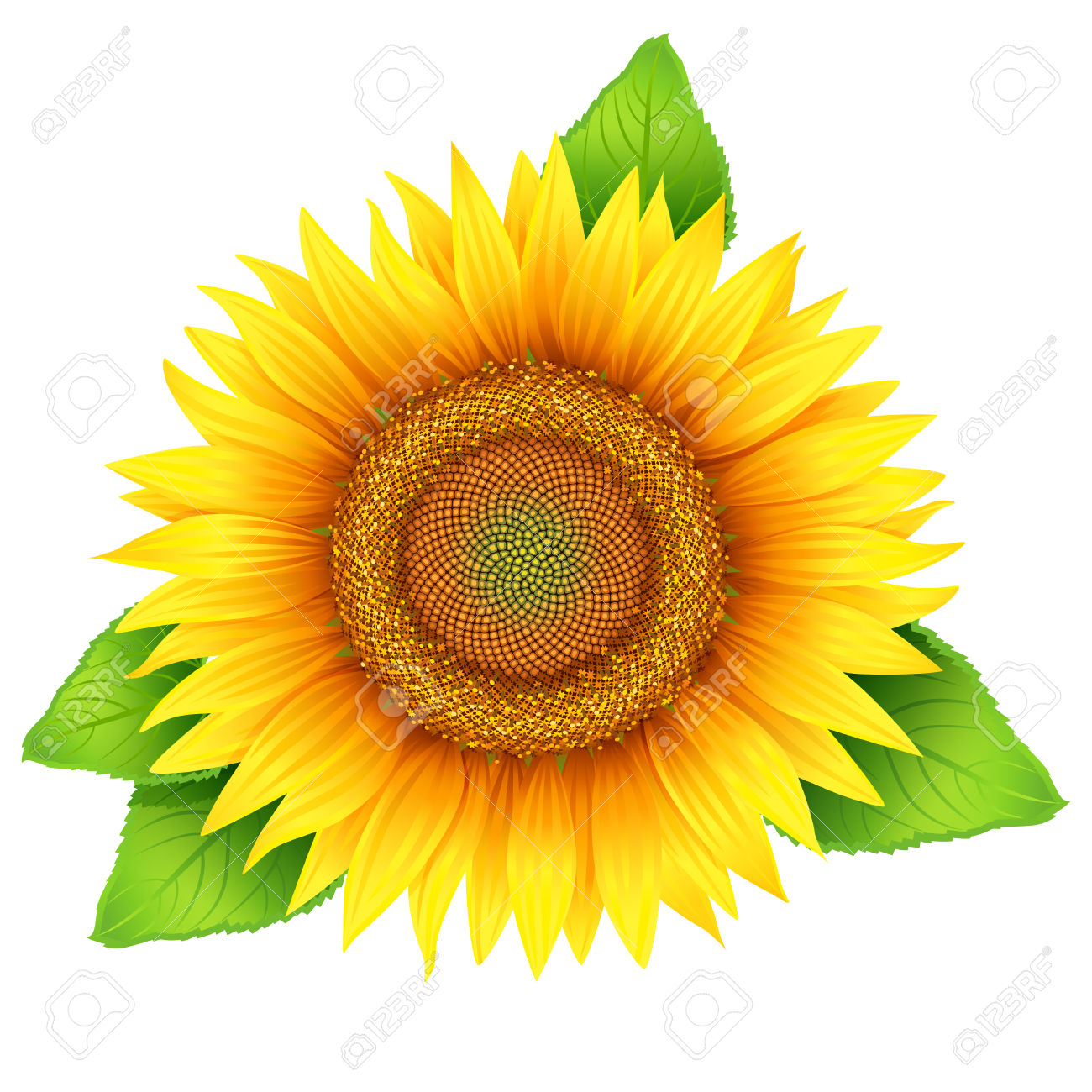 Sunflower leaf clipart.