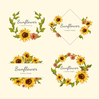 Sunflower Vectors, Photos and PSD files.
