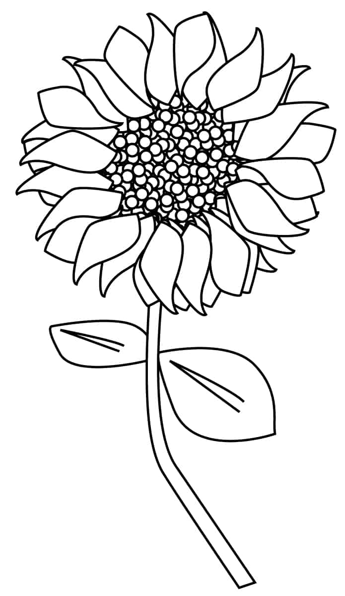 Sunflower Clipart Outline and more.