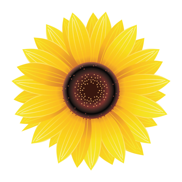 Sunflower PNG Image Free Download searchpng.com.