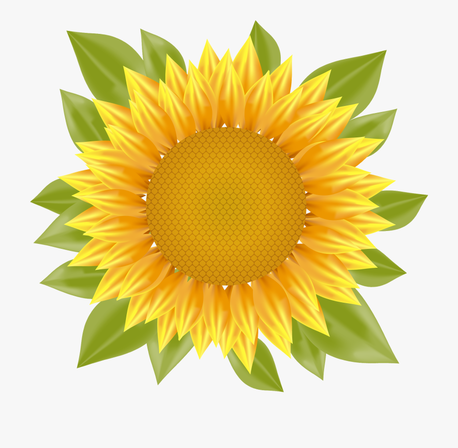 Sunflower Png Vector #381175.