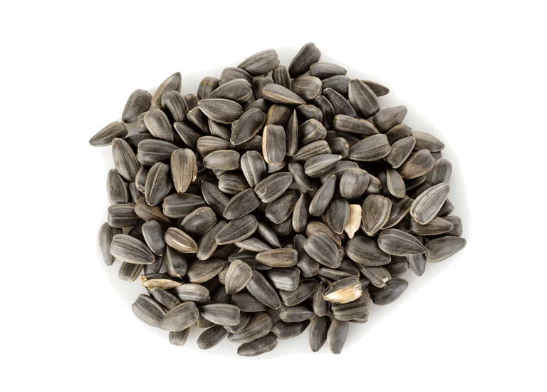 Sunflower Seeds PNG Image.