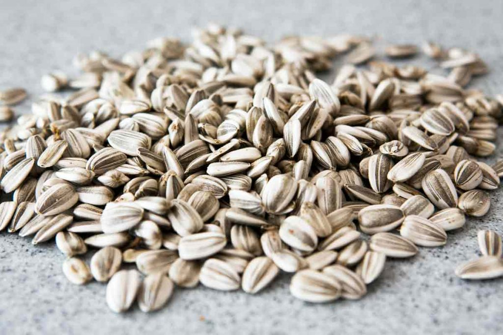 How to Harvest and Roast (in shell) Sunflower Seeds Recipe.