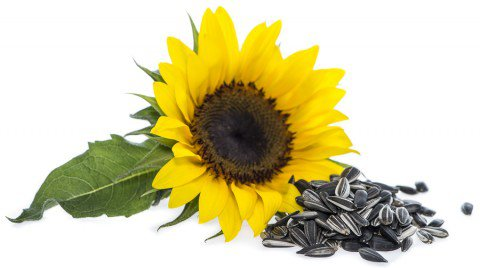 Sunflower Seeds: Benefits, Nutrition & Recipes.