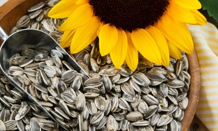 5 Super Health Benefits Of Sunflower Seeds.