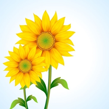 Sunflower free vector download (249 Free vector) for.