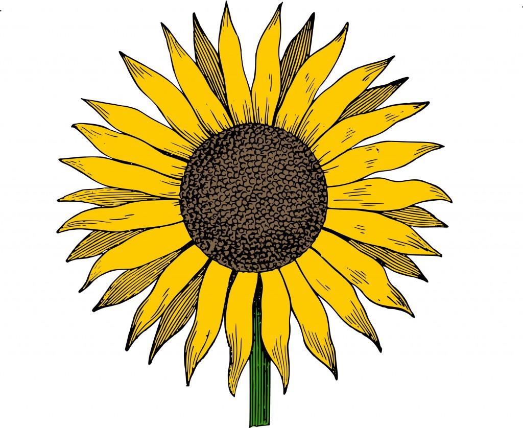 Free Clip Art Sunflower Vector Image.
