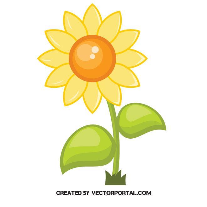Sunflower vector image.