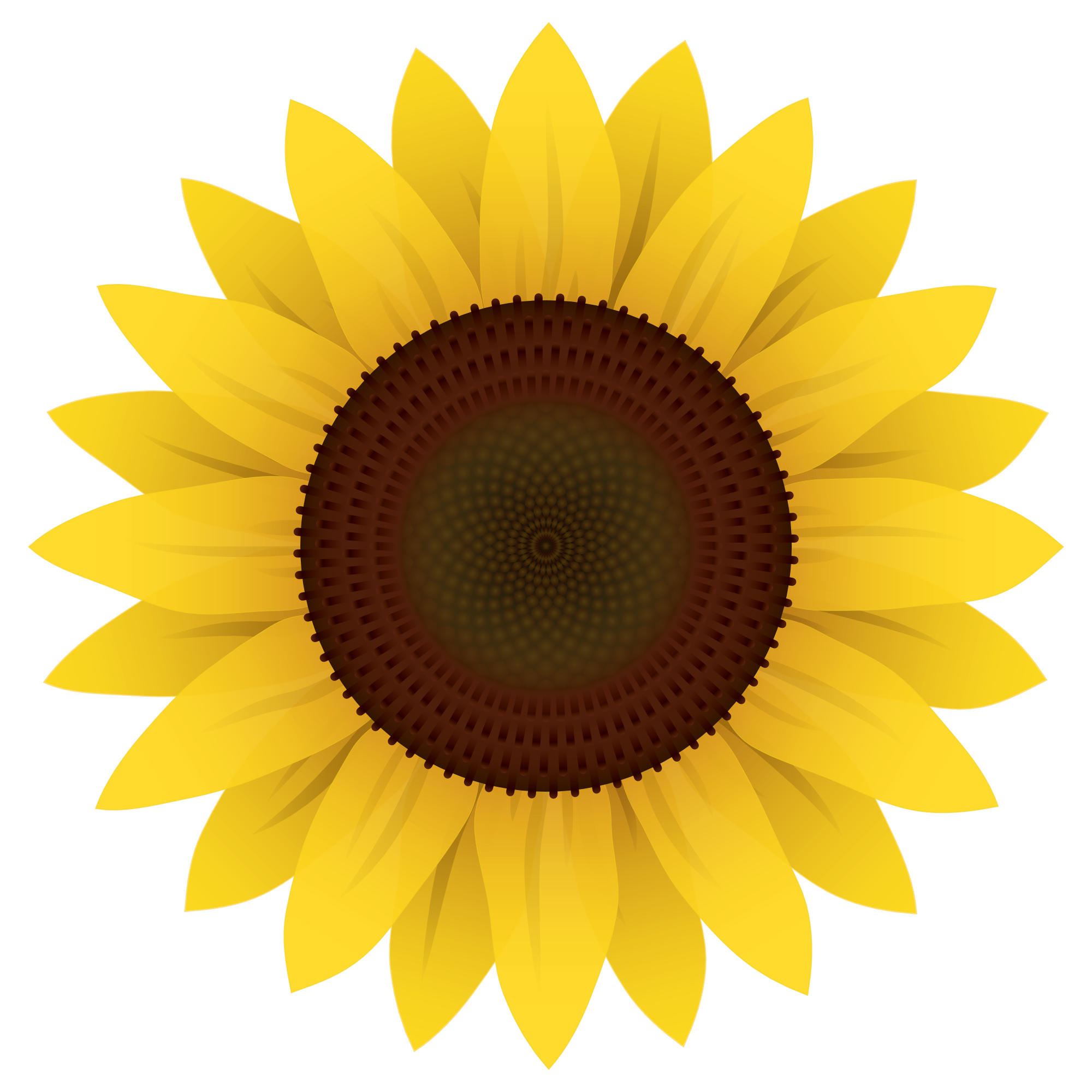 Sunflower Vector PNG Image.