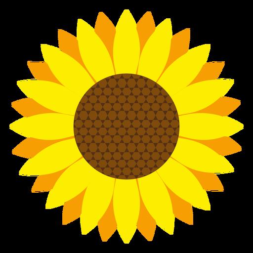 Sunflower head vector.