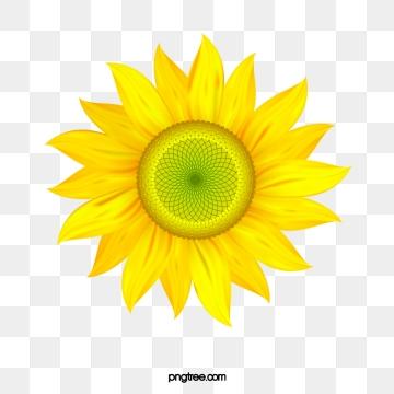 Sunflower Vector, Free Download Sunflowers, Sunflower.