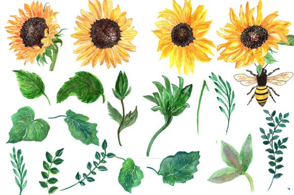 Sunflower watercolor clip art.