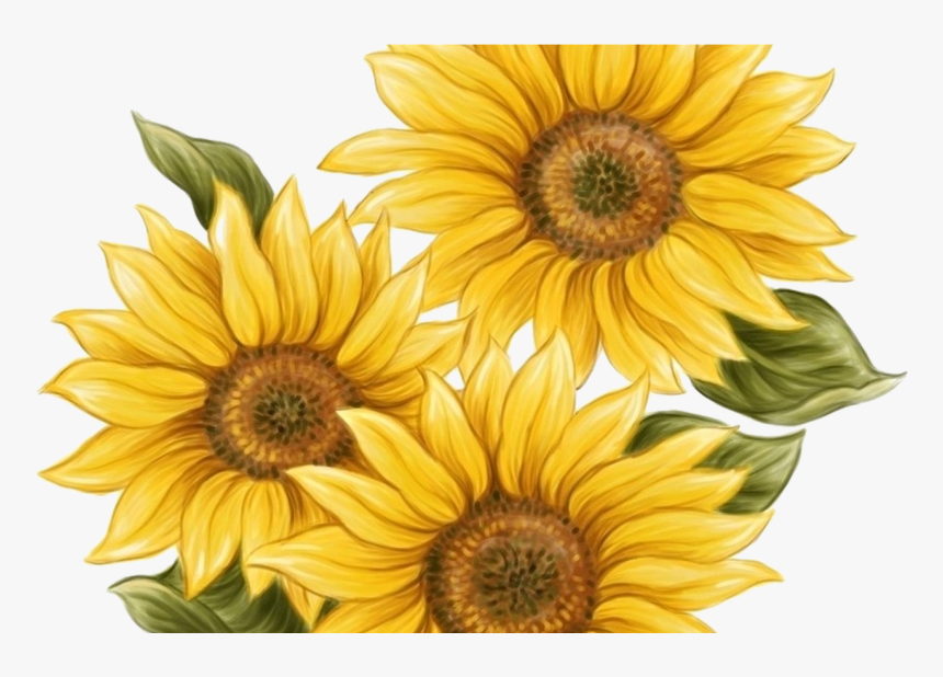 15 Watercolor Sunflower Png For Free Download On.