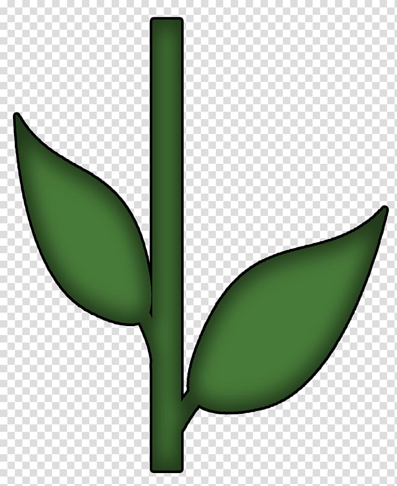 Green leafed plant , Plant stem Flower Petal Shrub.