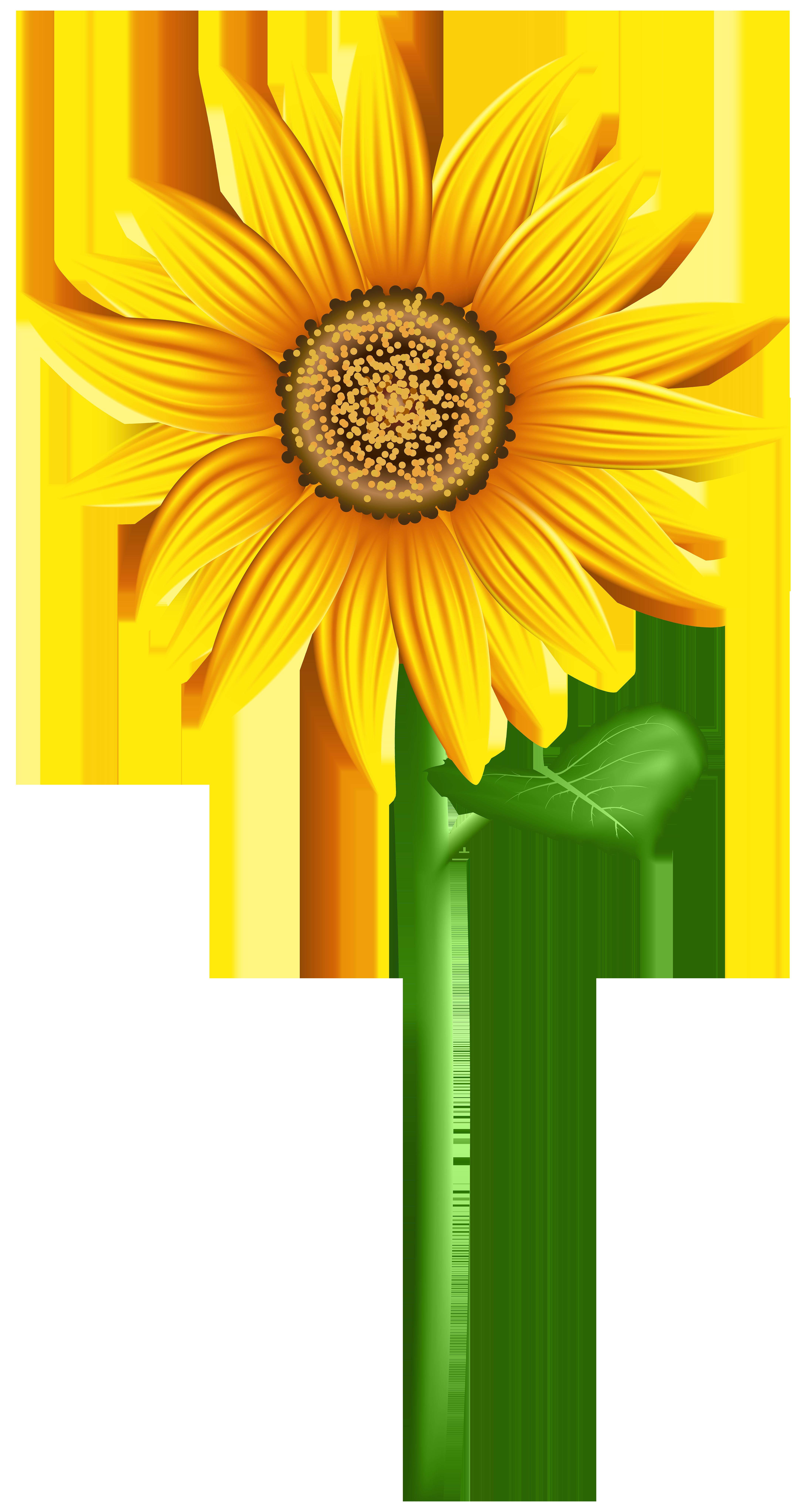 Sunflower PNG Transparent Clip Art Image.