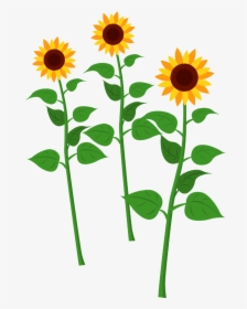Sunflower PNG Images, Free Transparent Sunflower Download.