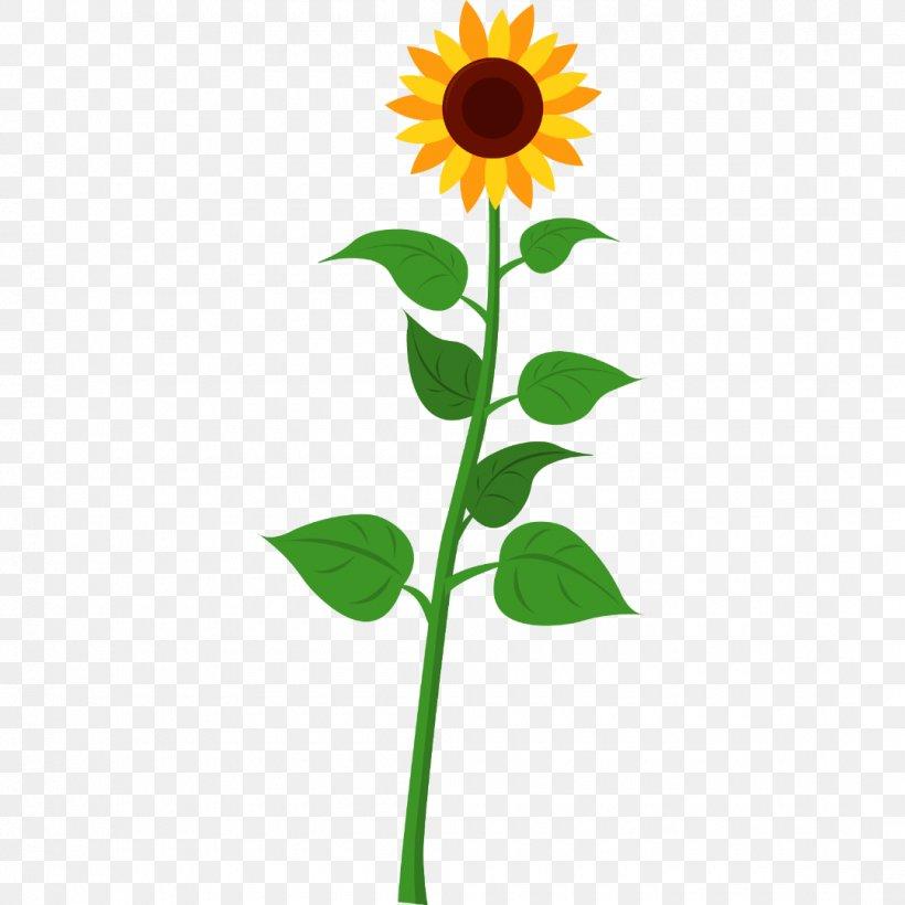 Sunflower, PNG, 1080x1080px, Flower, Daisy Family, Flowering.