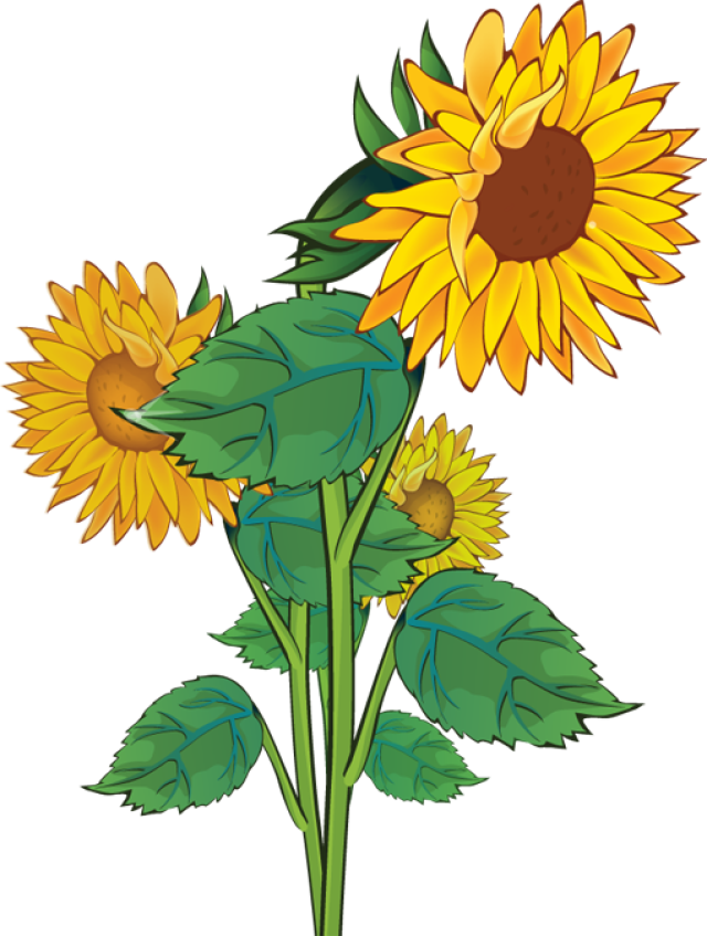 Rustic Sunflower Clipart.