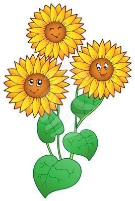 Sunflower clipart images.