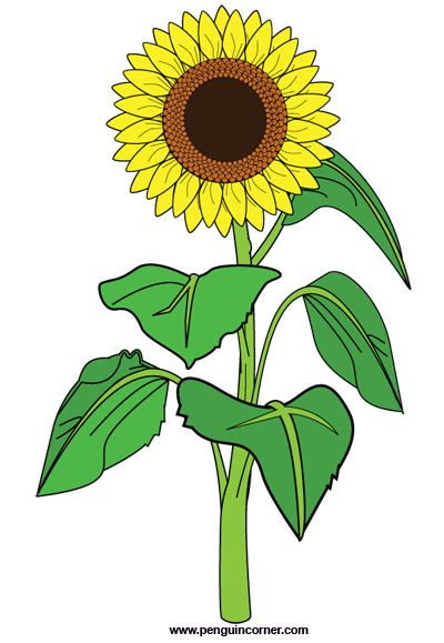 Sunflowers clipart black and white free.