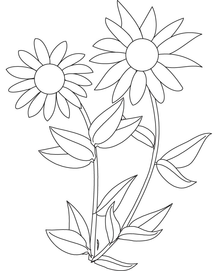 Sunflower Color Sheets.