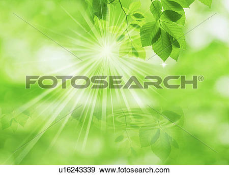 Stock Photograph of Sunlight through leaves over water (digital.