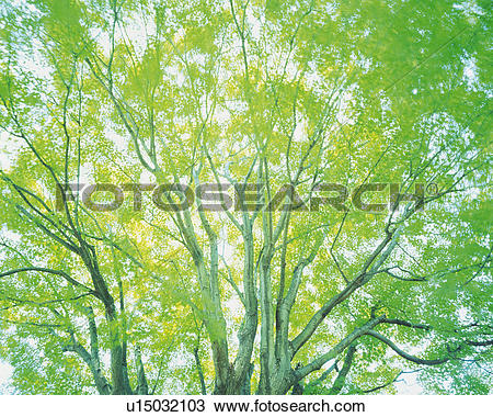 Stock Photo of a Tree With Several Leaves, The Sun Shining Through.