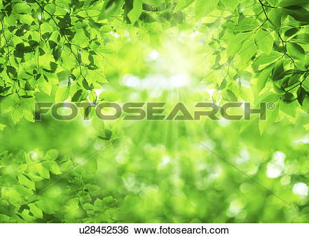 Stock Images of Sunlight through leaves u28452536.