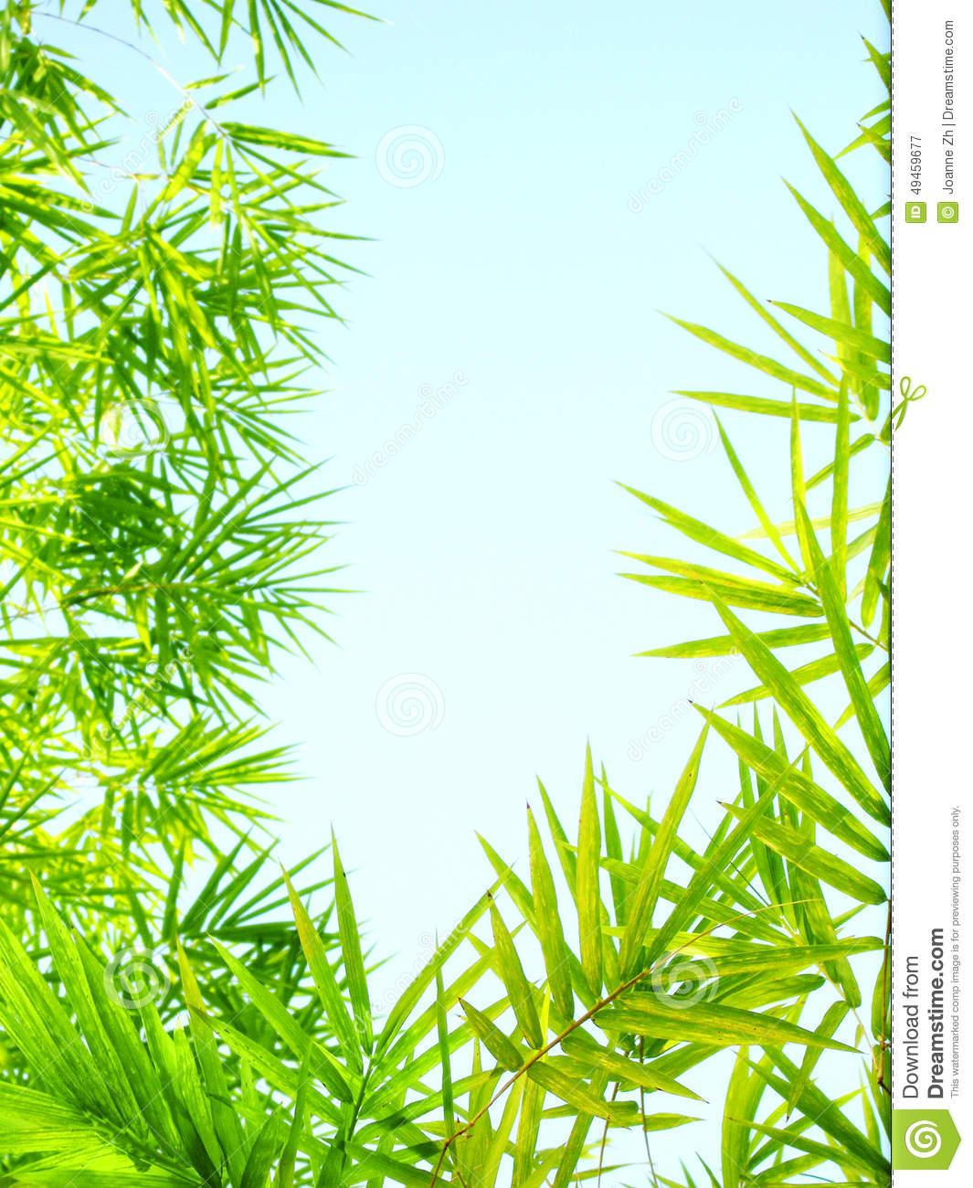 Sunlight Bamboo Leaves Frame Stock Photo.