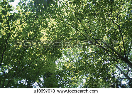 Stock Photo of Sunlight Through Leaves u10697073.
