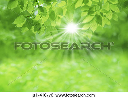 Stock Images of Sunlight streaming through leaves u17418776.