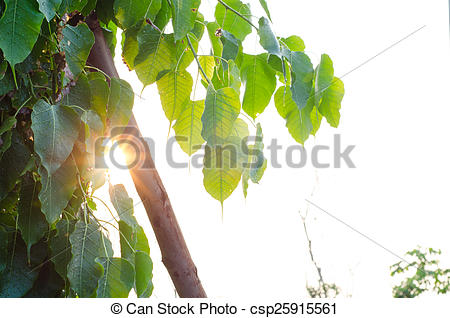 Stock Image of Sunlight through the green leaves.