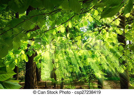 Stock Photography of Rays of sunlight falling through leaves.