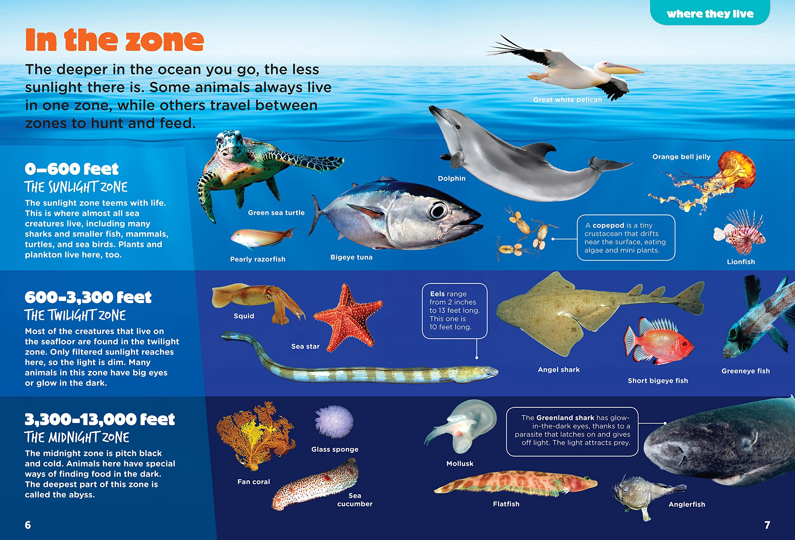 Sunlight zone ocean animals clipart Transparent pictures on.