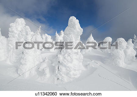 Stock Photography of Snow ghosts at the top of Sun Peaks ski.