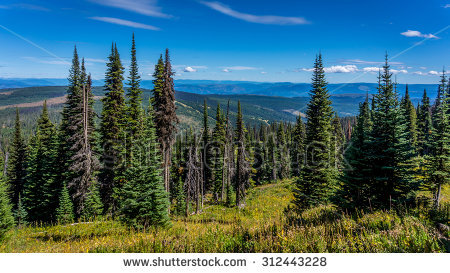 Summer Forests Meadows View Stock Photos, Royalty.