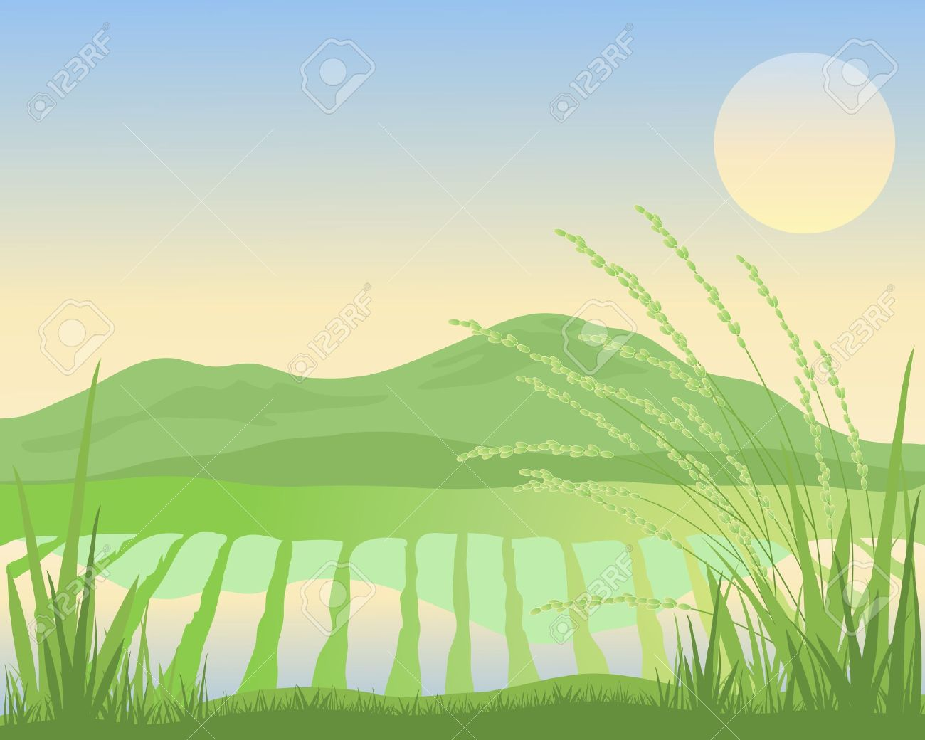 Rice Paddy Field Clipart.