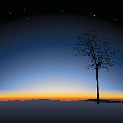 tree on sunset background Clipart Image.