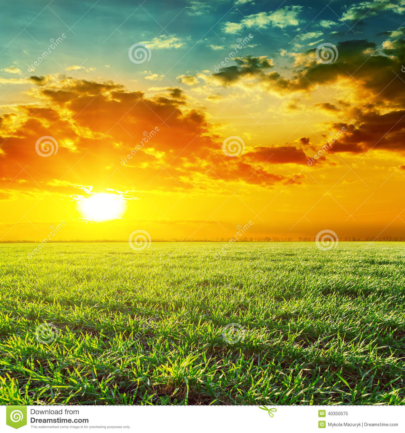 Sunset Grass Field Clipart.