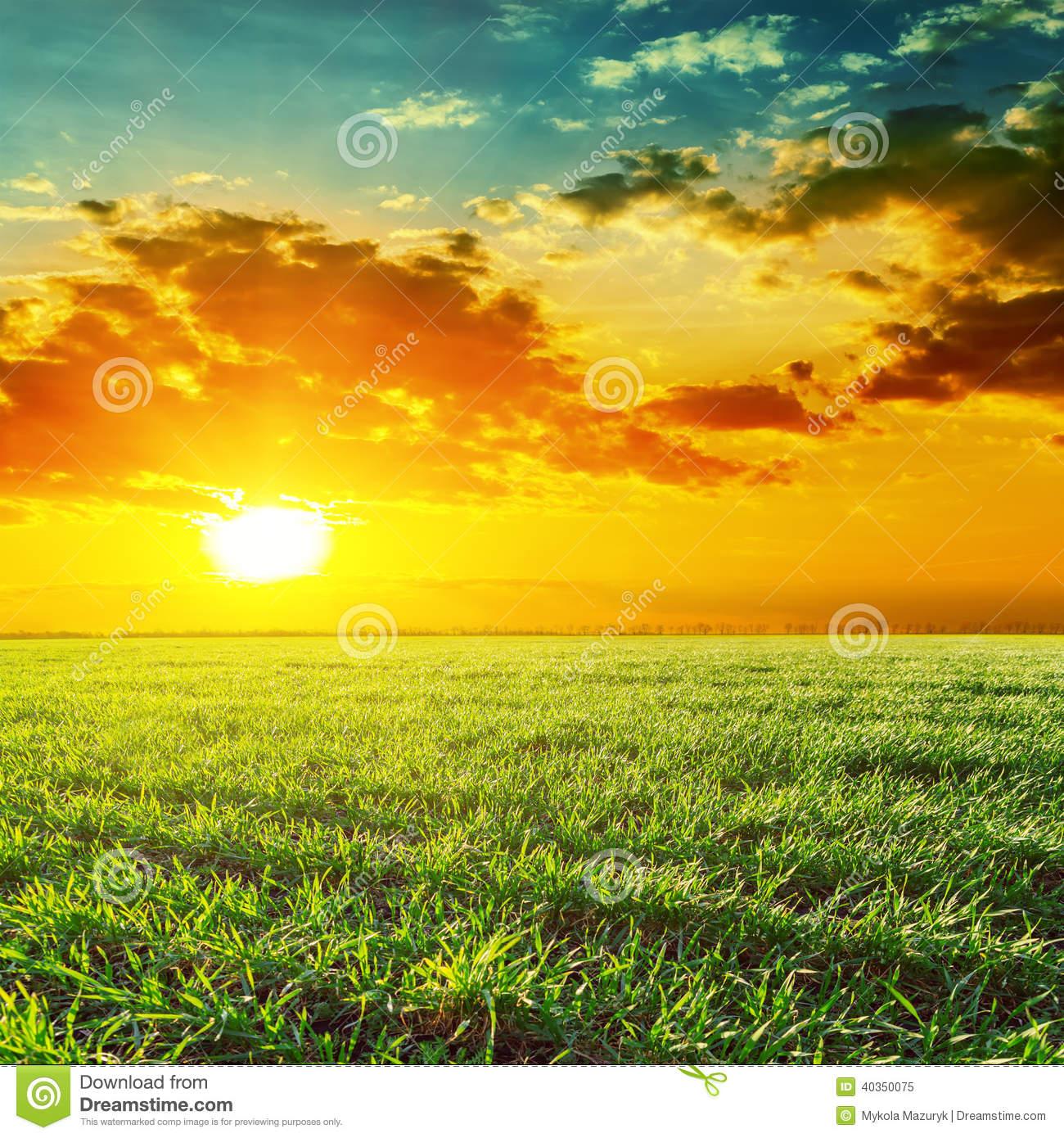 Sunset Grass Field Clipart.