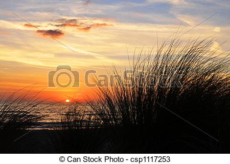 Stock Photos of Sunset on a Grassy Beach.