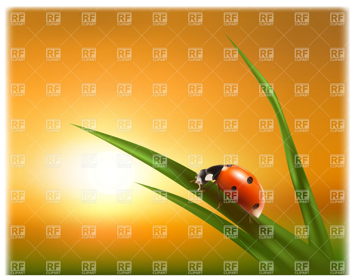 Ladybird on the grass at sunset Vector Image #4966.